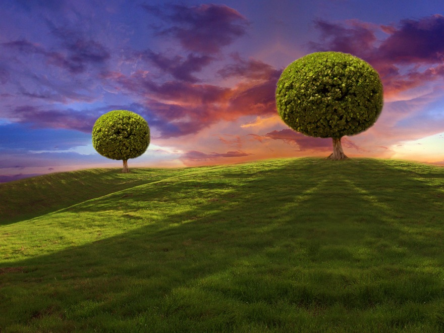 two-trees_1600x1200_24578