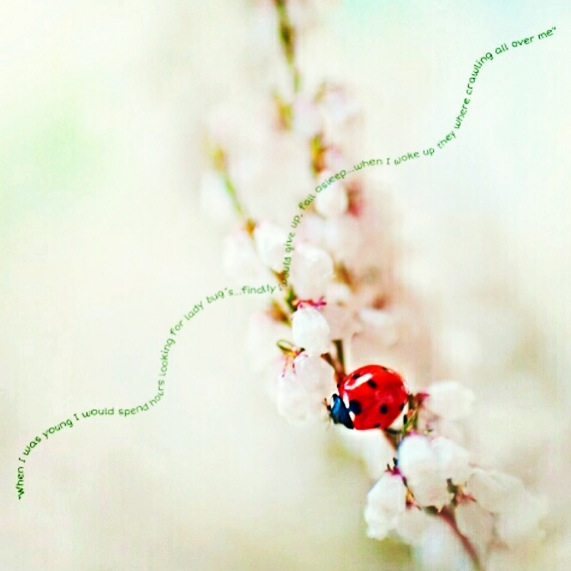 ladybug-quote