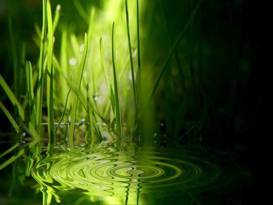 water-princess-green-grass