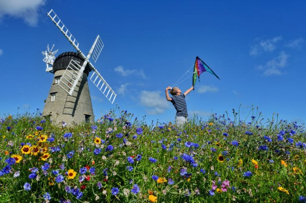 A sea of colour encircles this disused windmill in South Shields, after South Tyneside council decid