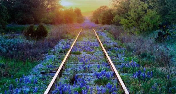 texas_bluebonnets_railroad_tracks_texas_usa_20120406