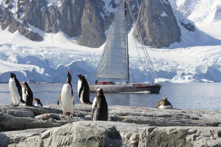 Penguins ahoy...