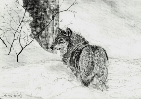 wolf-drawing-4_zpsd62a95a5