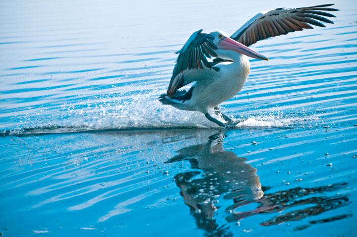 189-Pelican-The-Entrance-Central-Coast-NSW-Australia