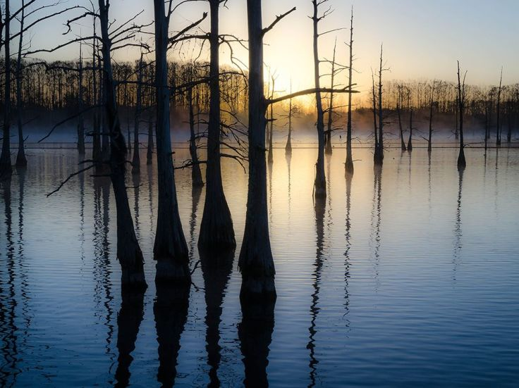 black-bayou-lake-louisiana_87528_990x742