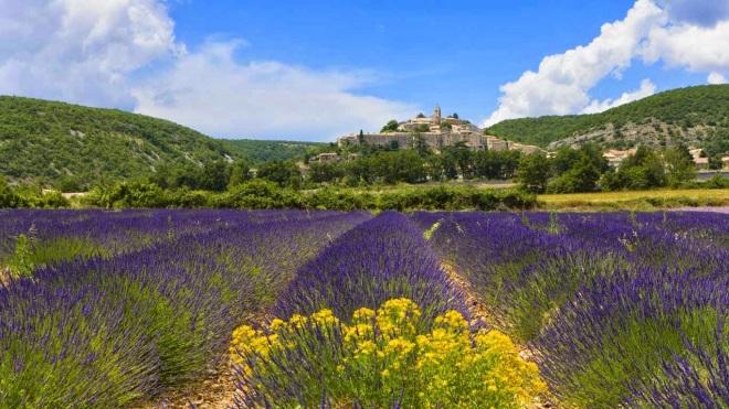 Lavender fields, Banon, France 20140329
