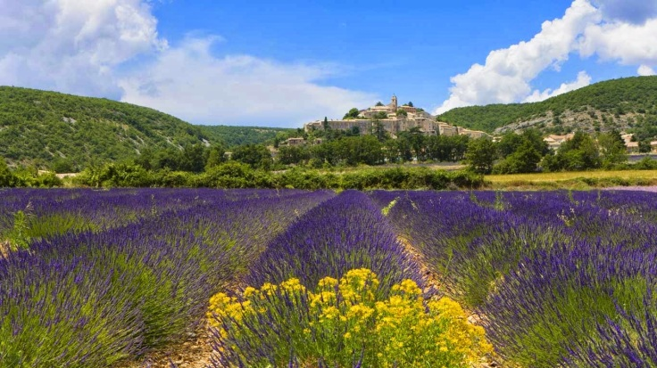Lavender fields, Banon, France 20140329
