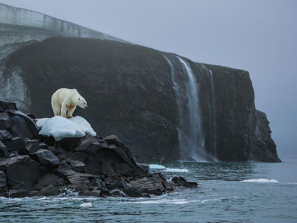 polar-bear-rudolf-russia_82056_990x742
