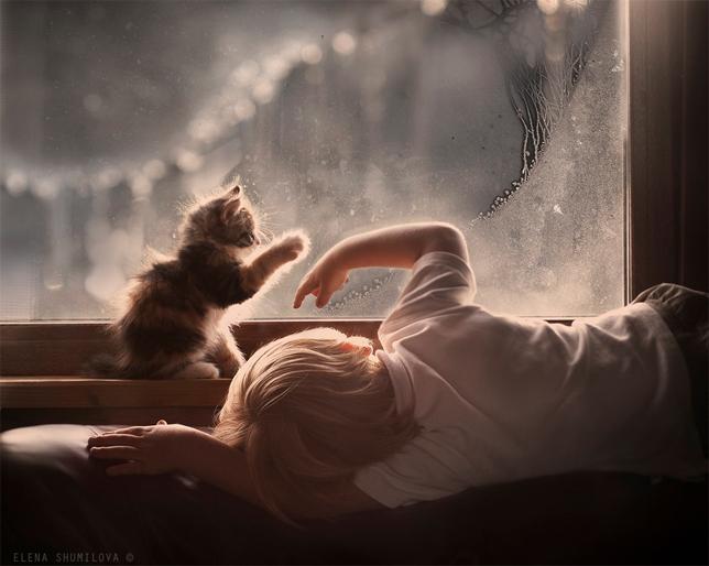 elena-shumilova-boy-kitten-window-frost