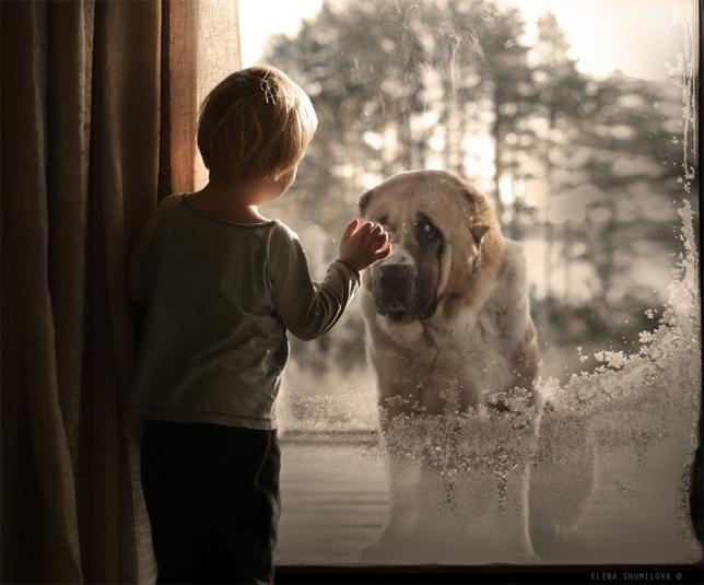 elena-shumilova-dog-window
