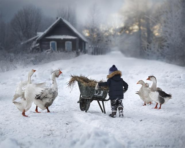 elena-shumilova-snow-geese