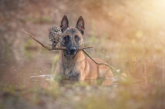 ingo-else-fetch