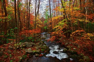 autumn-in-tennessee-fall-creek-great-smoky-mountains (1)