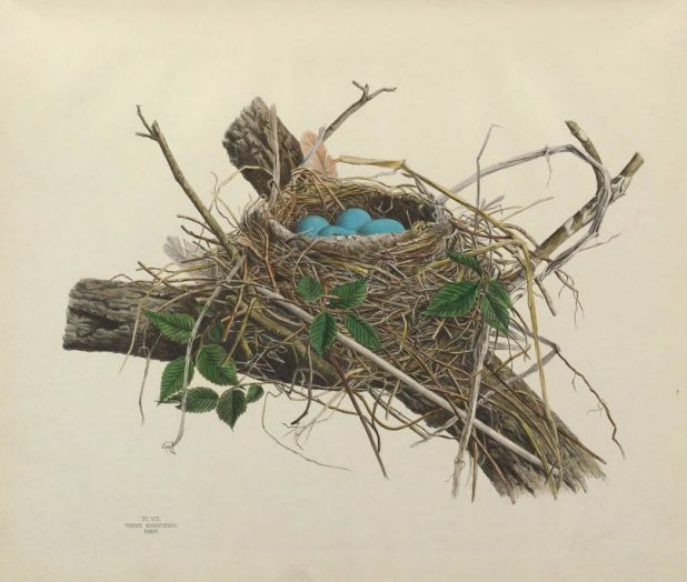 Illustrations_of_the_nests_and_eggs_of_birds_of_Ohio_(Pl._VIII)_BHL34907621