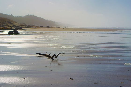 800px-Driftwood_Beach,_Oregon