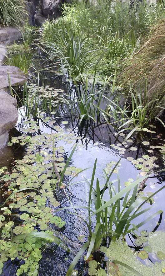milarri-garden-bunjilaka1