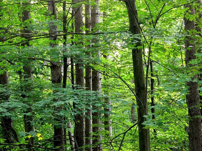 trees-green