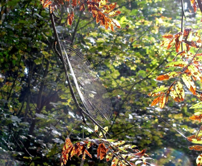 leaf-3187882_960_720