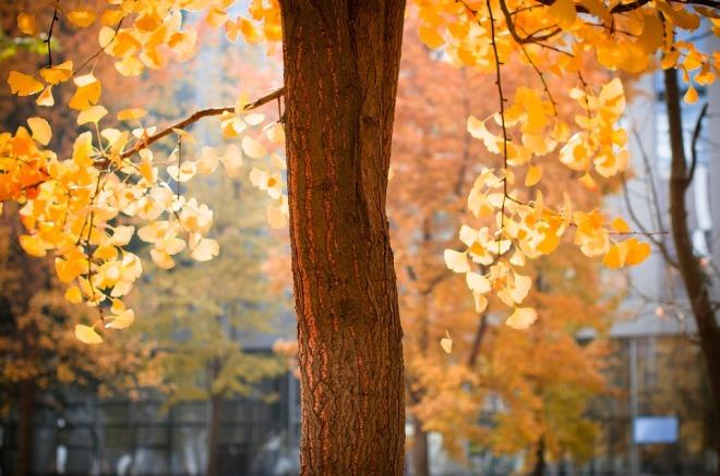 autumn-3224946_960_720